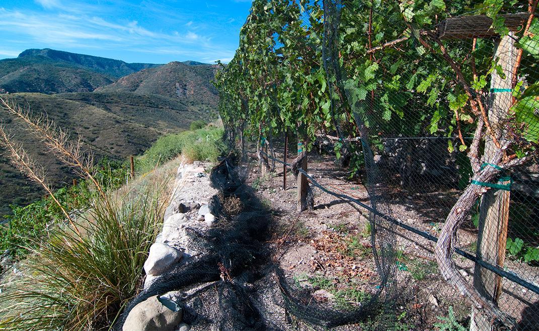 Verde Valley Vineyard 2