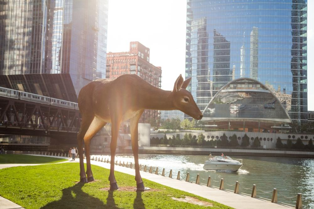 The Deer at the River Bank
