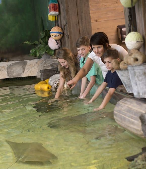sting rays_Zoo- Fort Wayne-Indiana