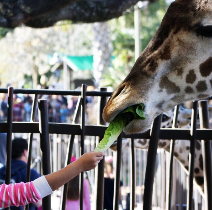 Yo Mariana - Zoologico Girafas