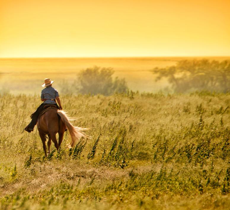 Flint Hills Horse Ride