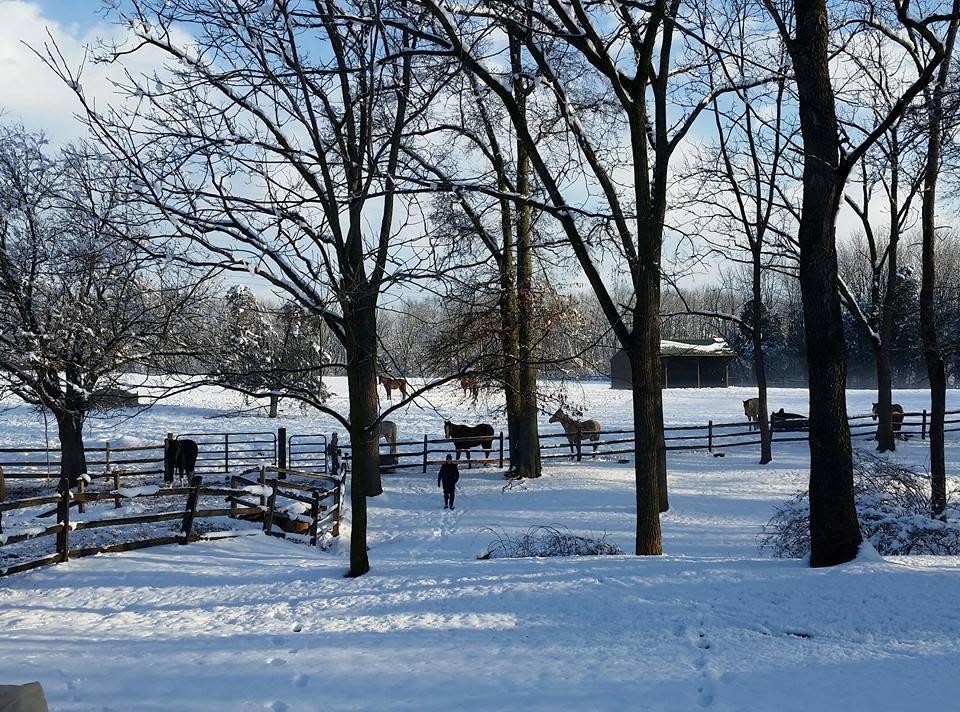 Red Buffalo Ranch