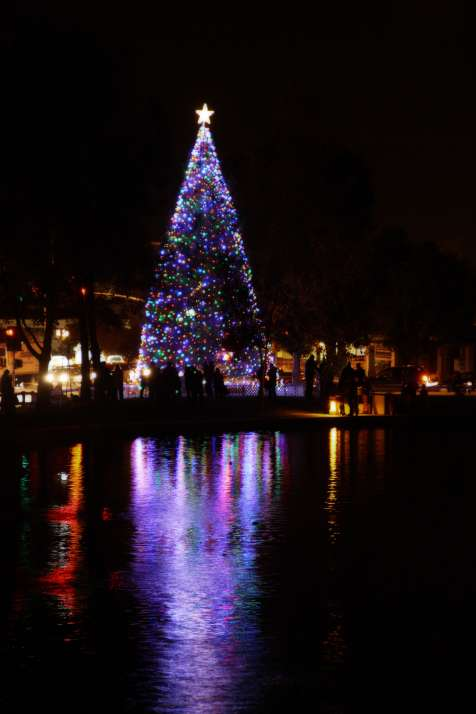 Christmas Tree Lighting at the Pond