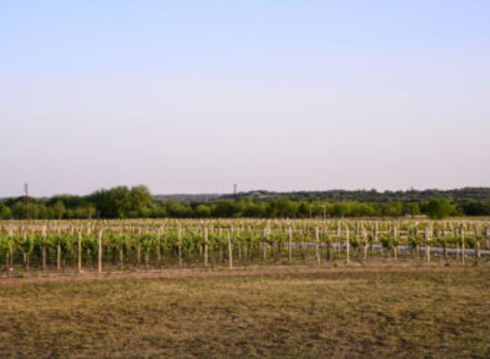 Pemberton Vineyard