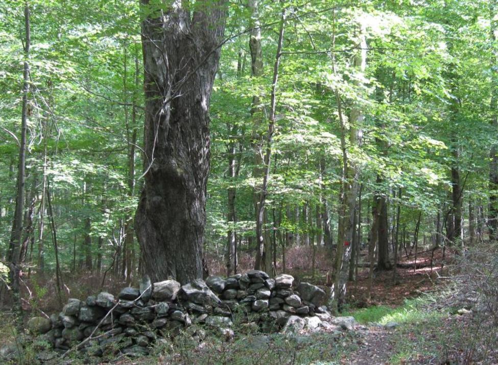 mount holly preserve