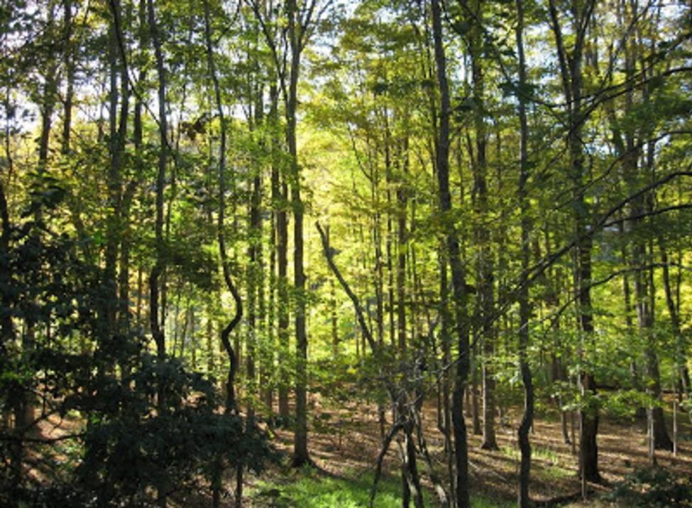 kitchawan preserve