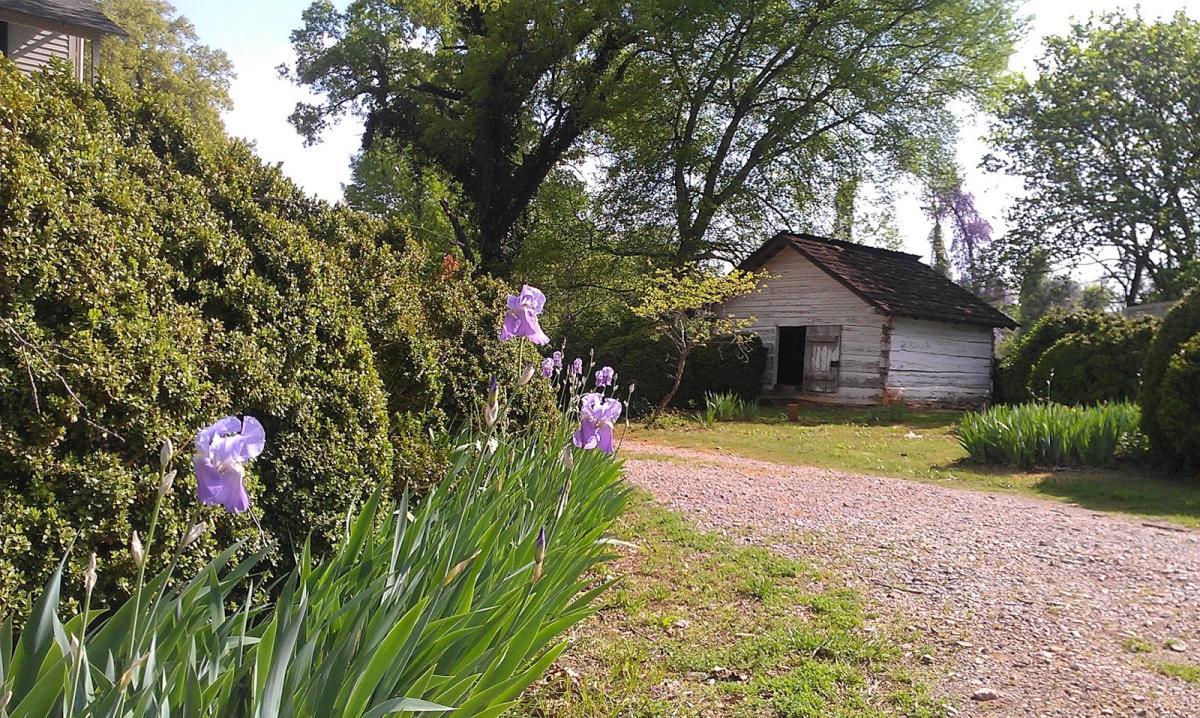 Pond Spring Iris