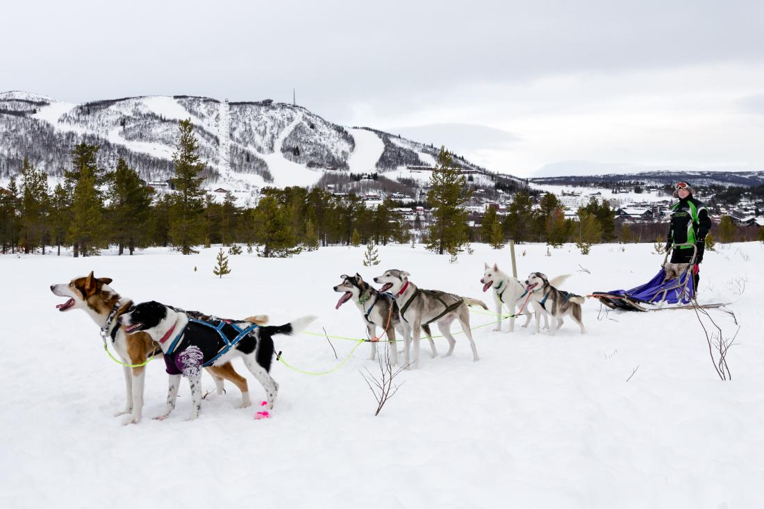 Hundeslede med Geilo Husky