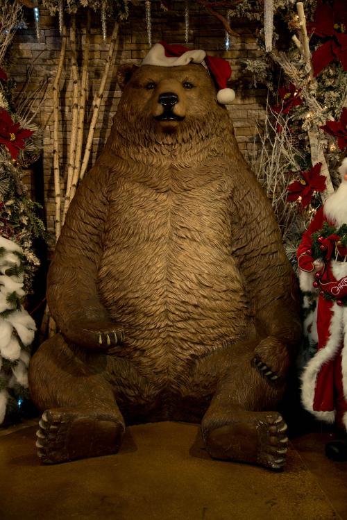 DW Bear