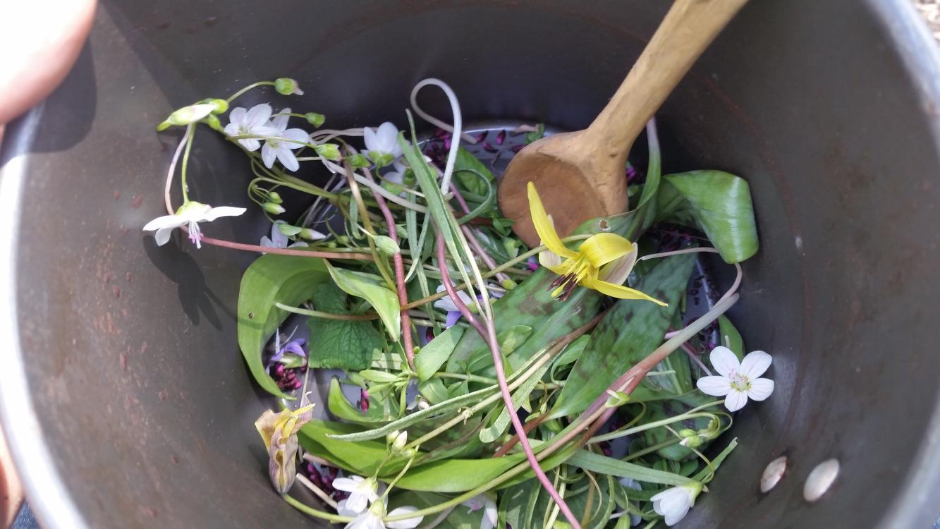 Wild life Salad