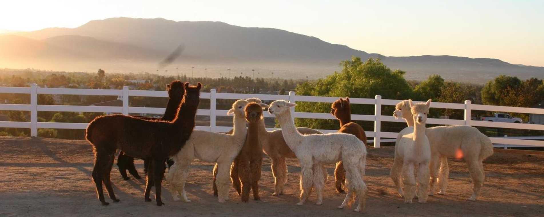 Alpaca Hacienda