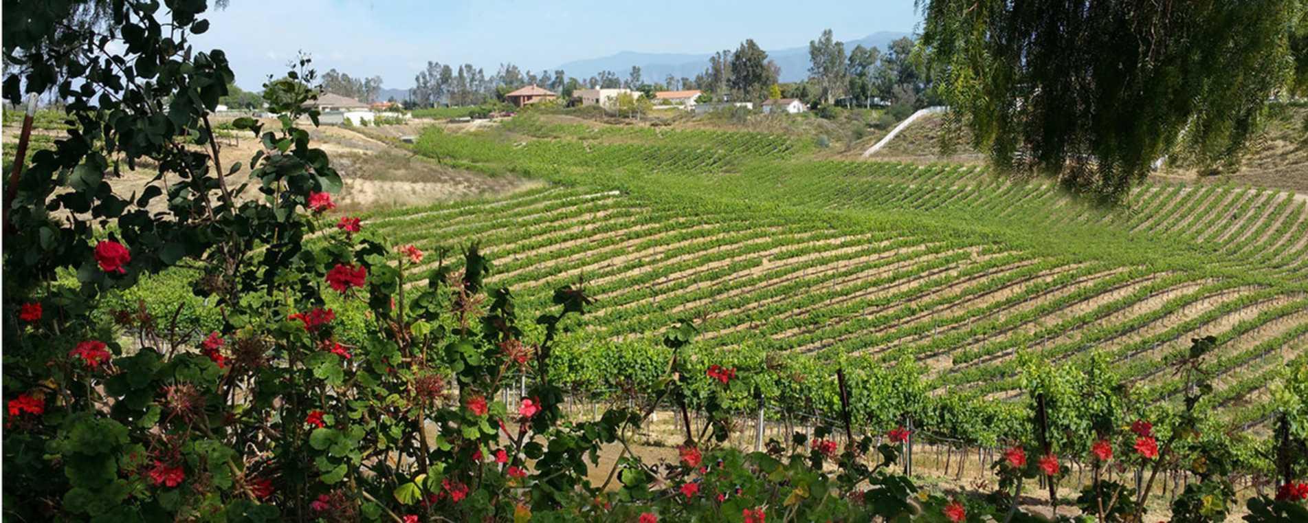 Bel Vino Landscape