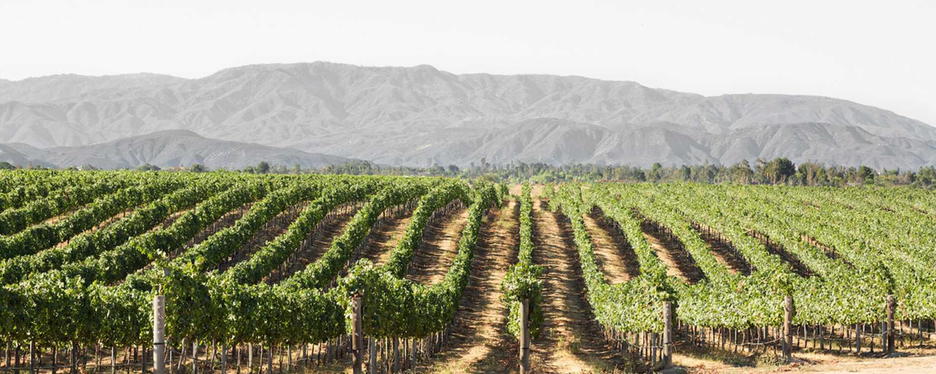 Ponte Family Estate Winery - Temecula