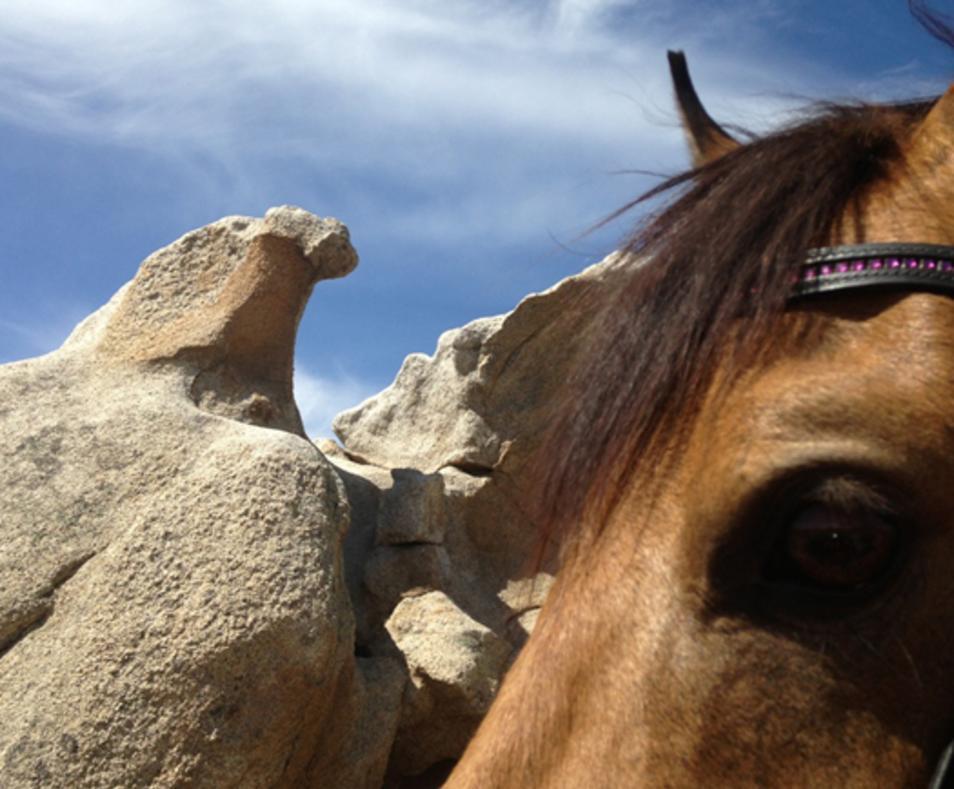 Pampered pony