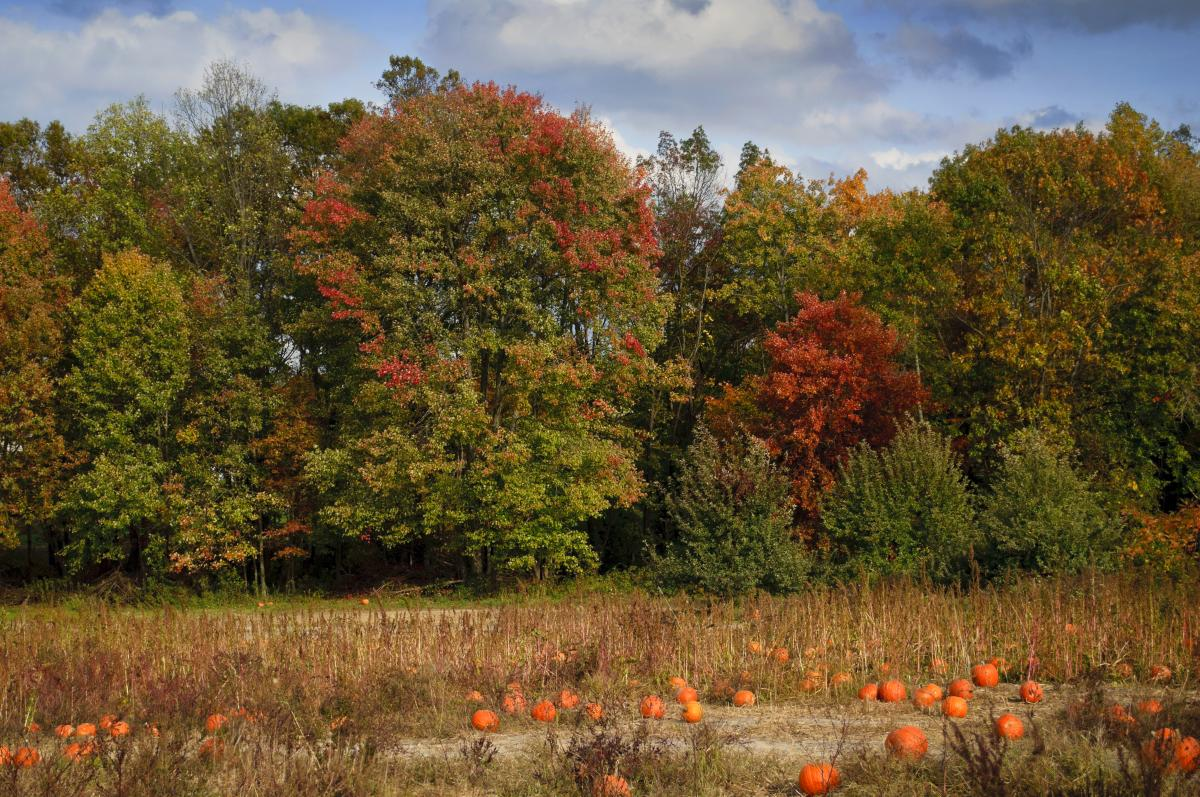Fall at Styer Orchard