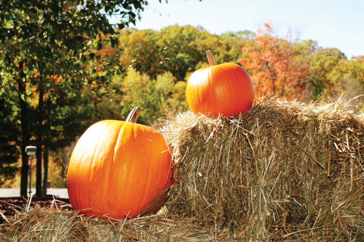 Pumpkin Picking in the Pocono Mountains