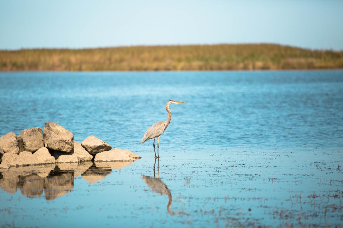Back Bay Wildlife.jpg