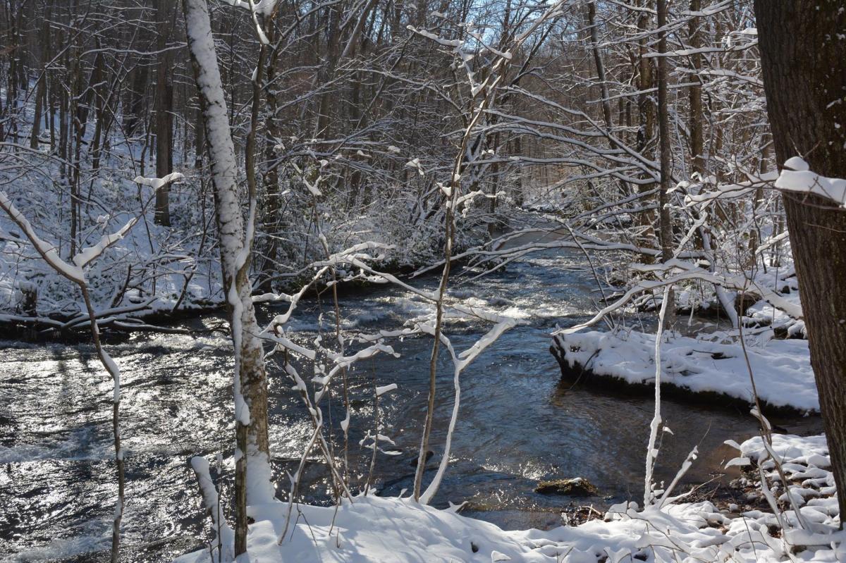 Laurel Hill State Park Winter