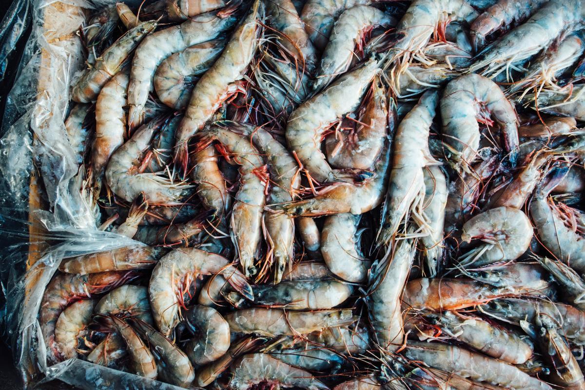 Gulf Seafood - Lance Nacio, Shrimp