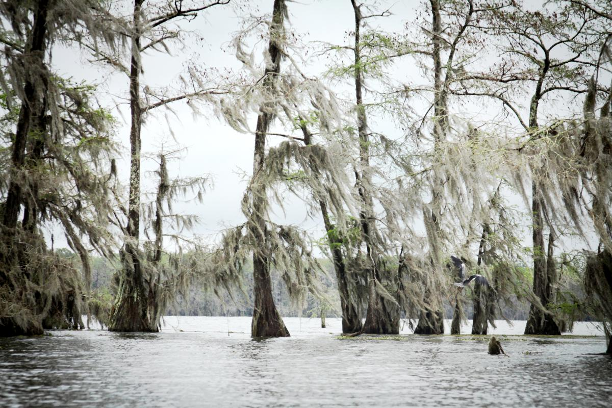 Bayou Vermilion Excursion