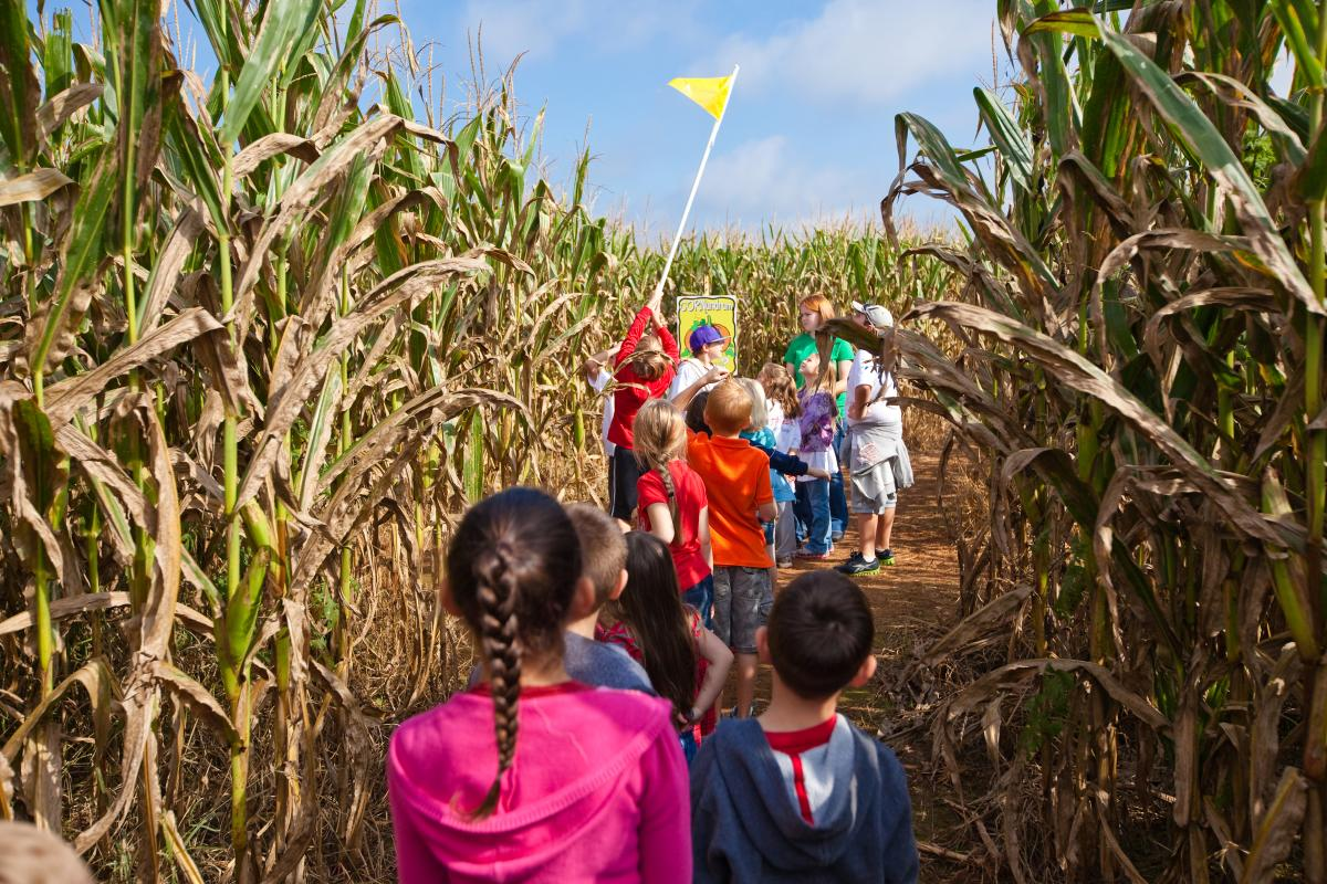 Corn Maze at Lane Southern Orchard