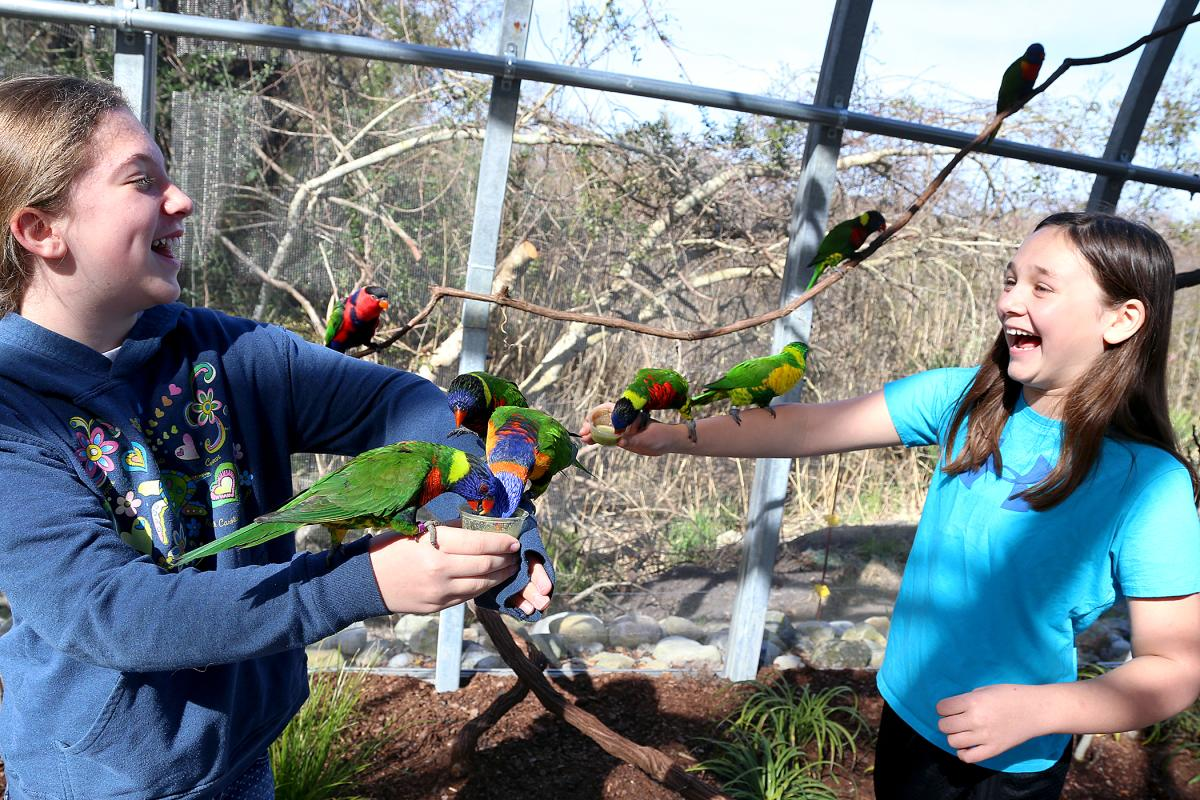 Lorikeet Landing at NC Aquarium Fort Fisher, NC