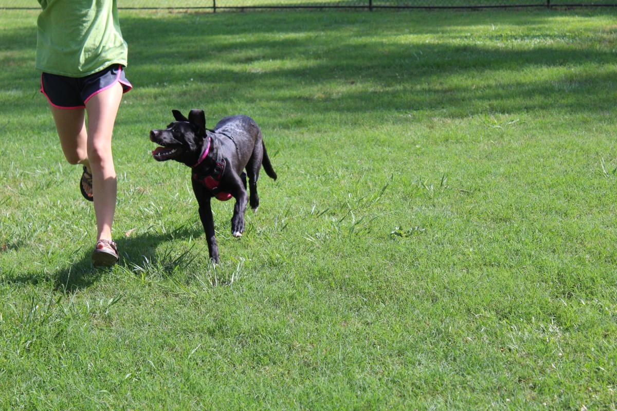 Dog Park at the Greenway