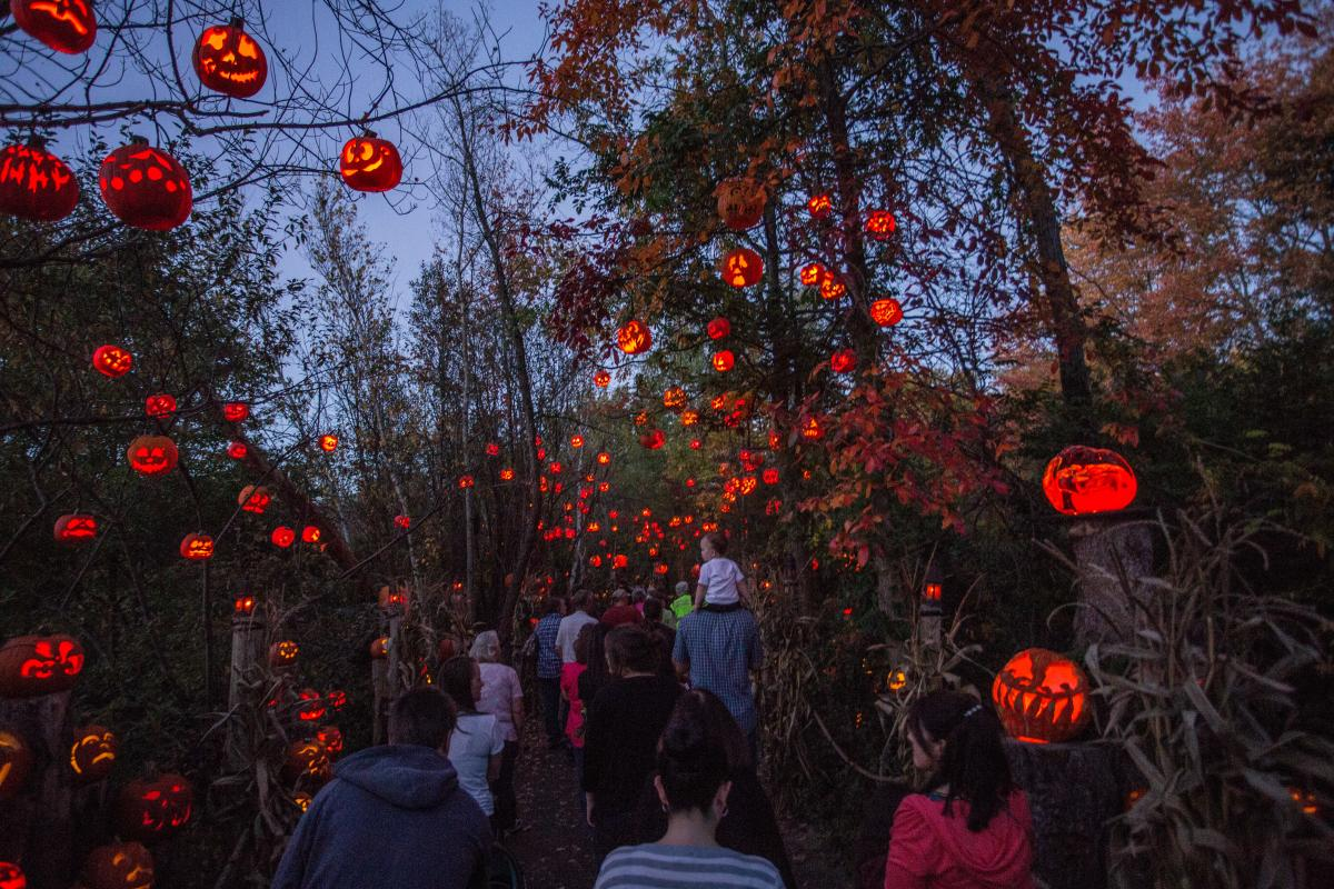 Groups of families and friends walking under a canopy of Jack-O-Lanterns and autumn-colored trees.