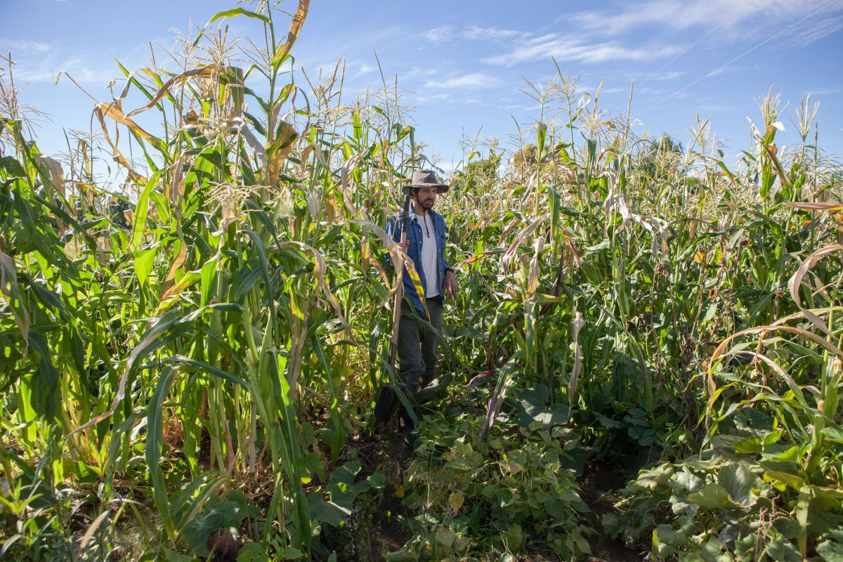 Lander Burr in his corn field