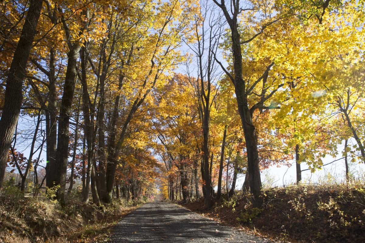Fall foliage on back road