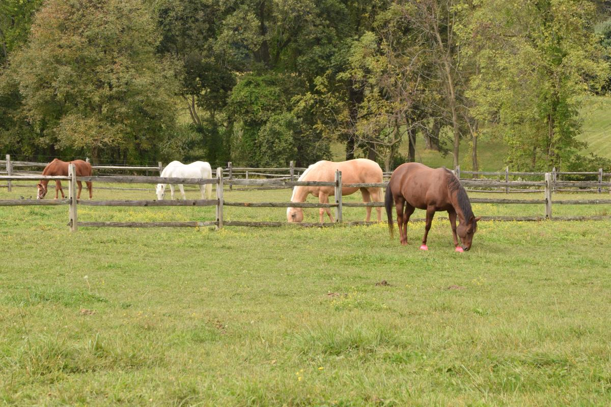 Horses in Bucks County