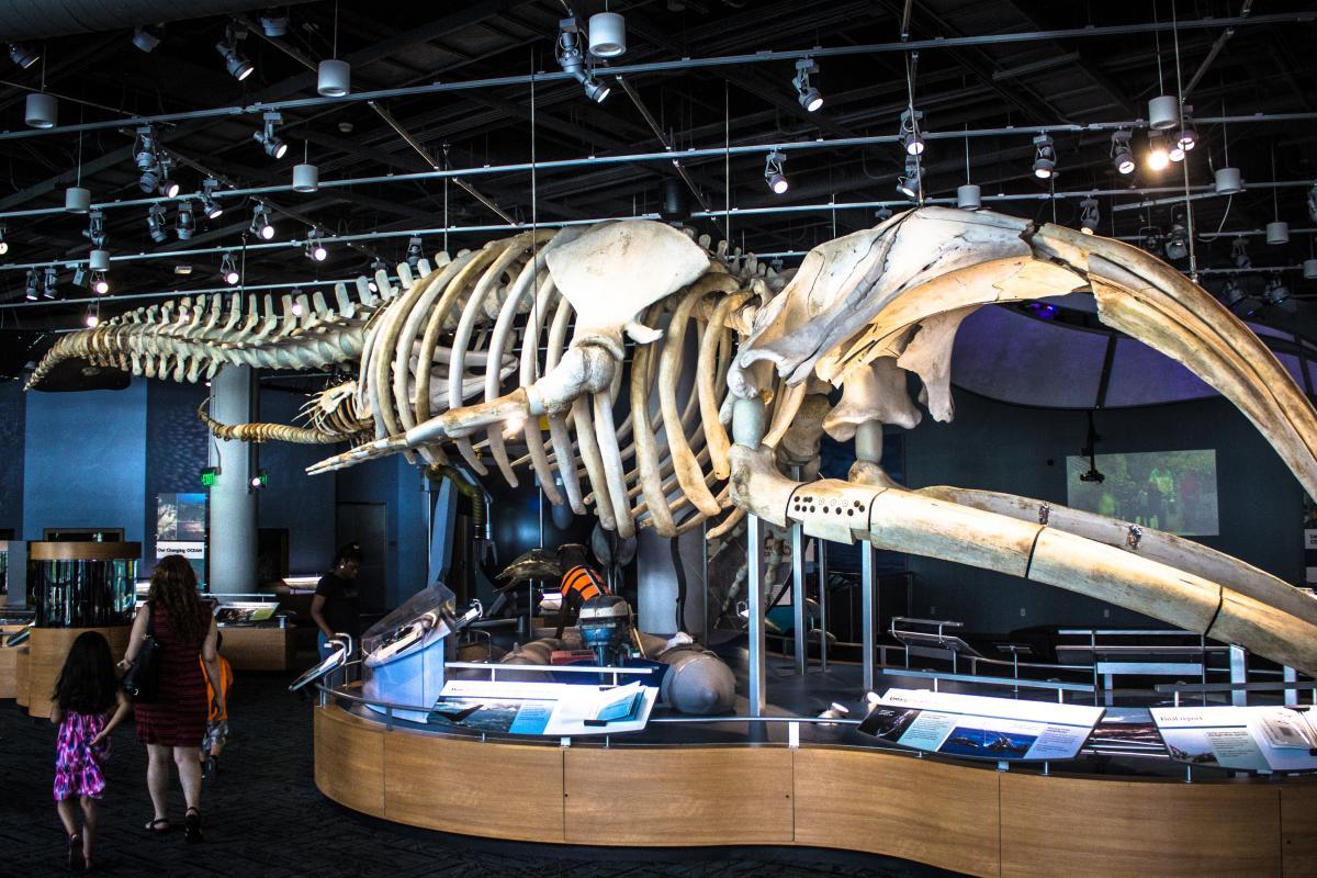 The North Carolina Museum Of Natural Sciences