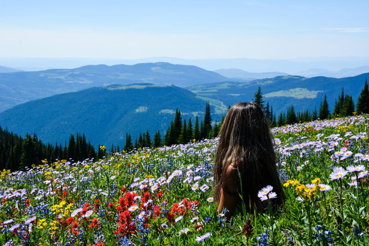 Sun Peaks Alpine Blossom
