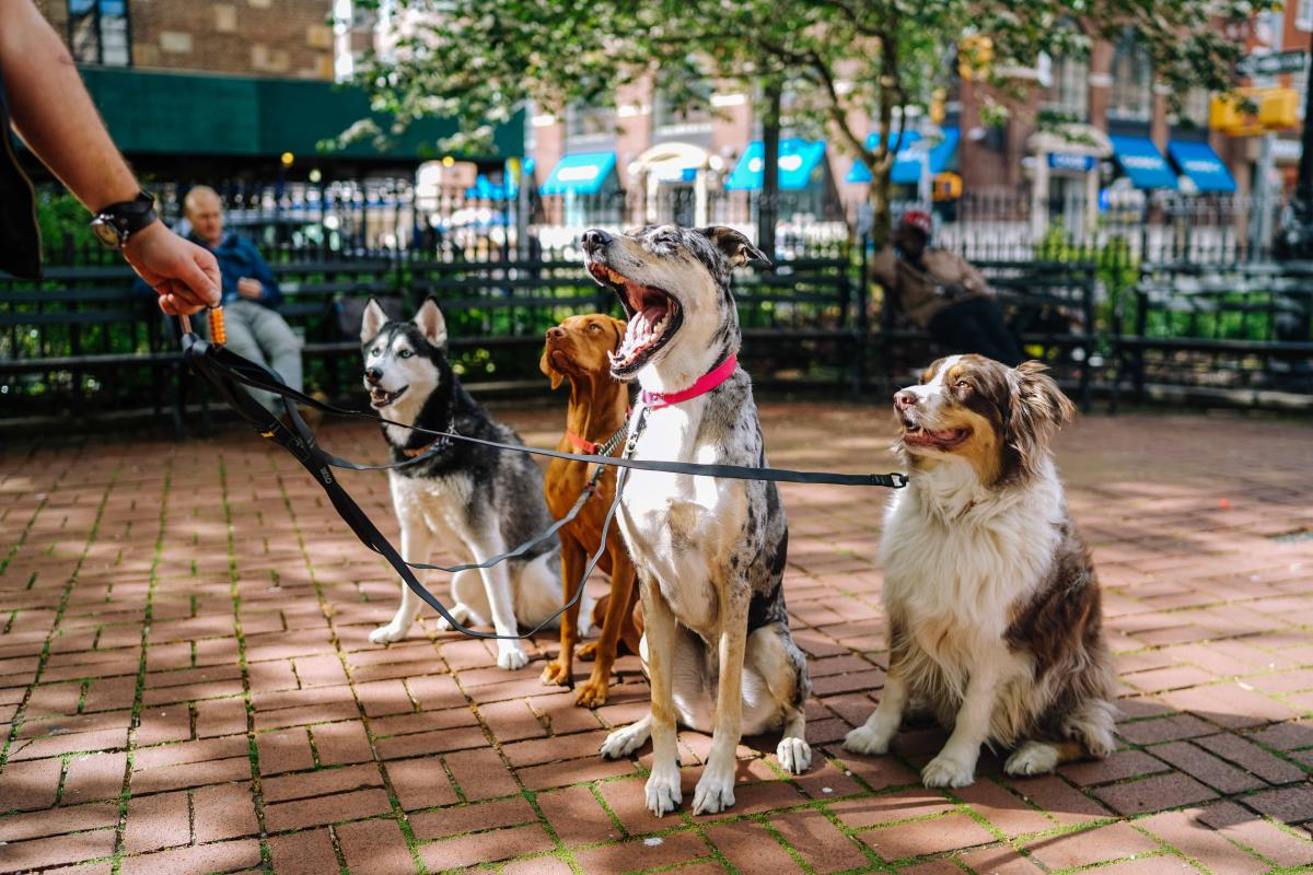 Four Dogs on a Walk