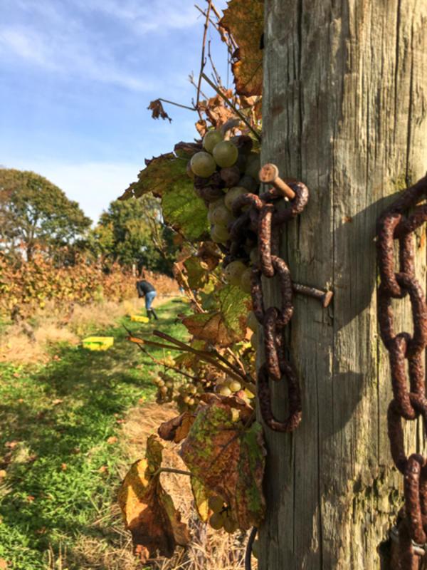 greenvale-vineyards_credit-discover-newport-4872