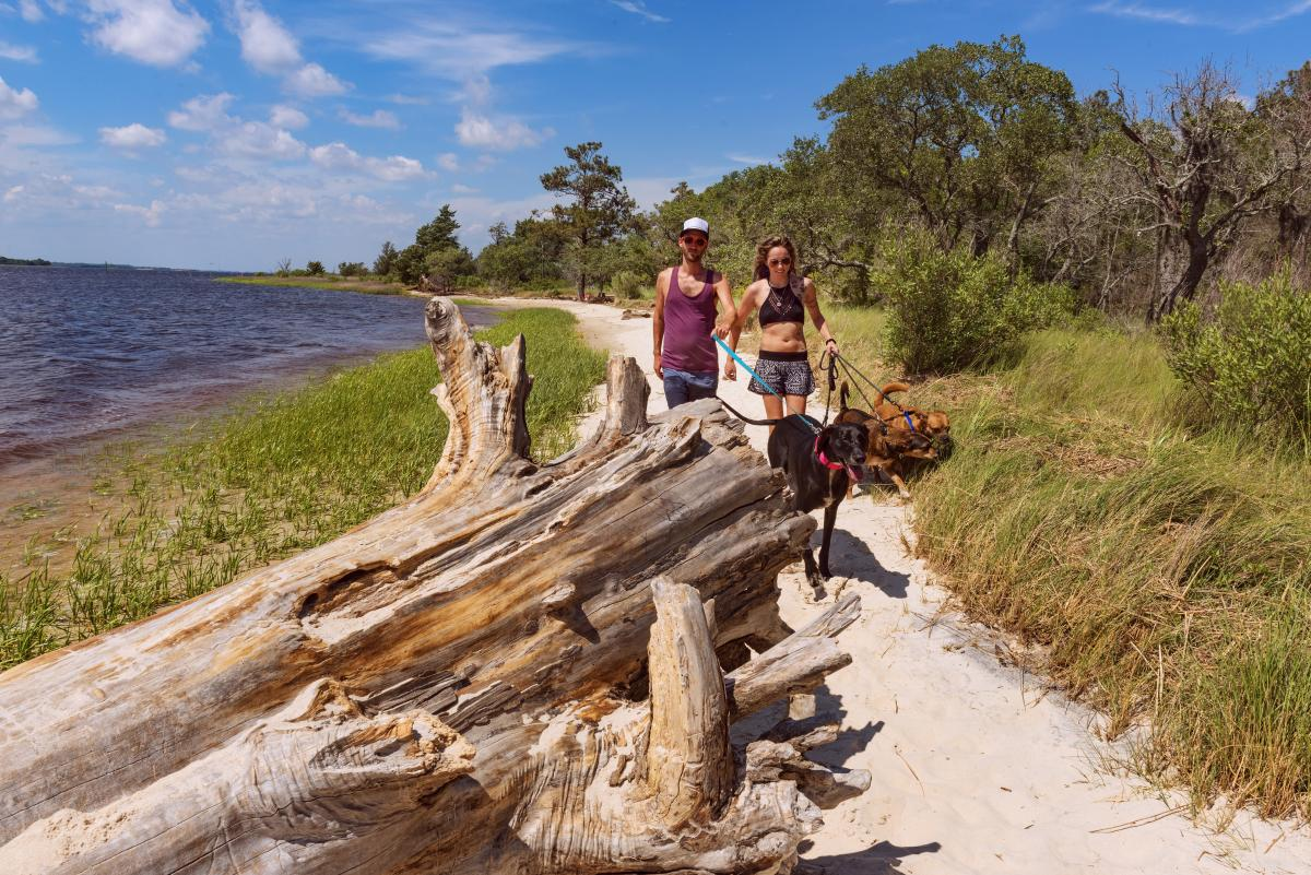 Carolina Beach State Park dogs