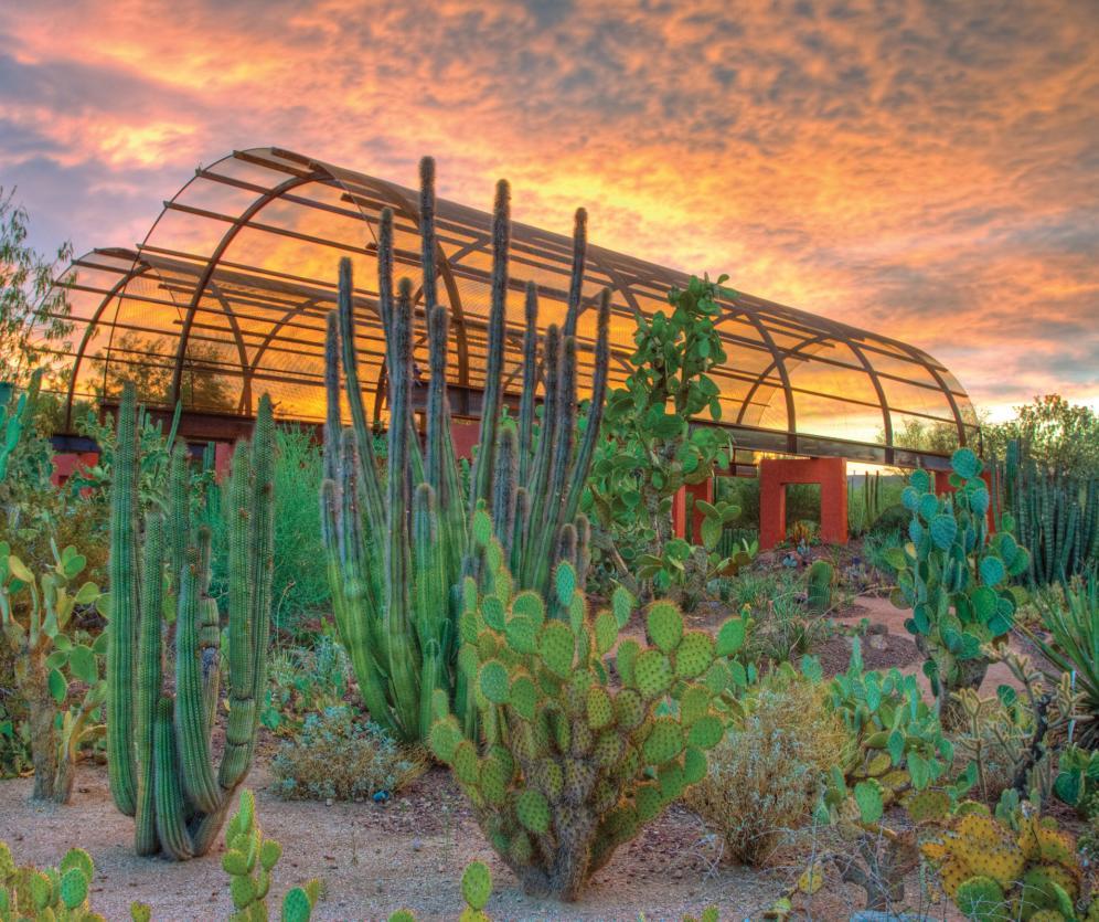 Captivating Experience Scottsdale Amazing Design