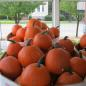 Cascio's Fruit Market