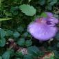 Beginner's Fungi Hike