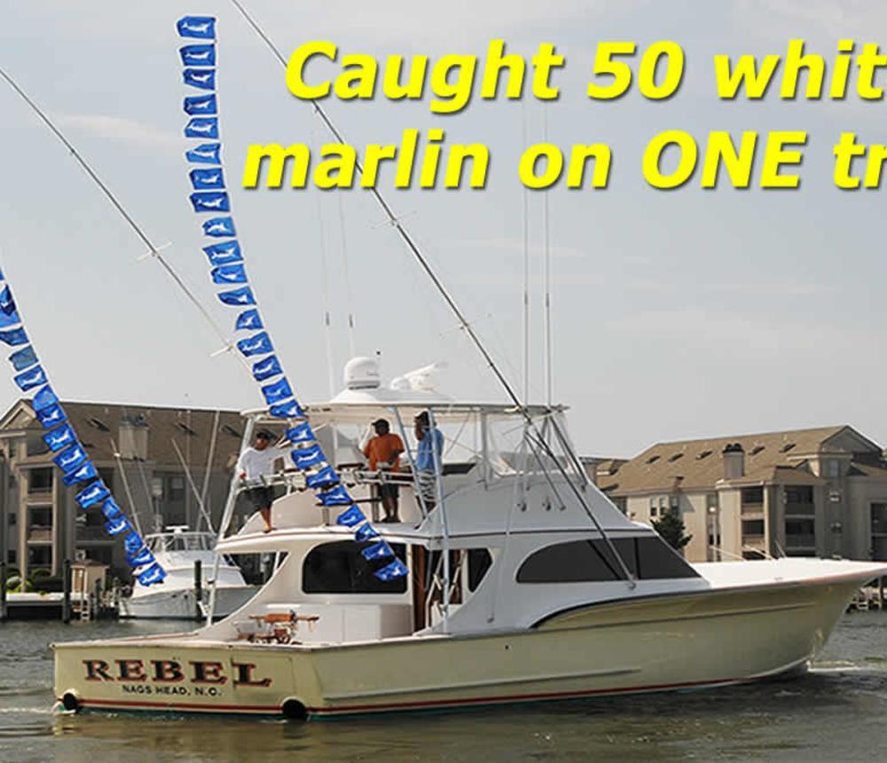 3-white-marlin.jpg