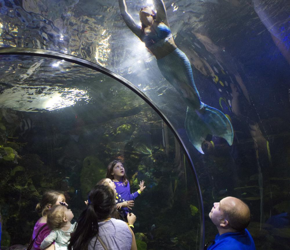 Mermaid in the Red Sea Aquarium