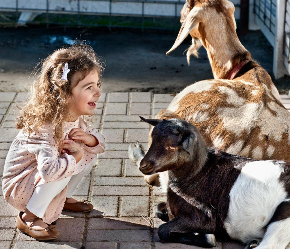 Visiting with goats