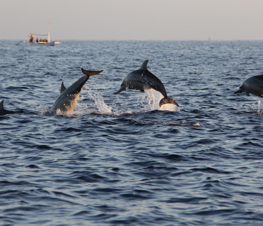 Dolphin tours Virginia Beach