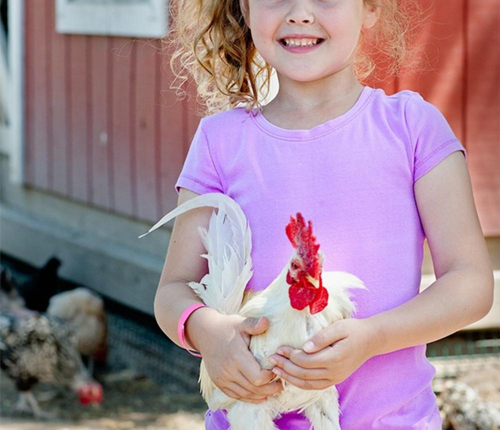 Holding Chickens