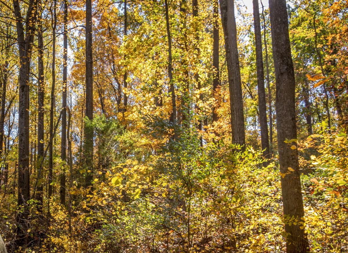 fall woods newsletter