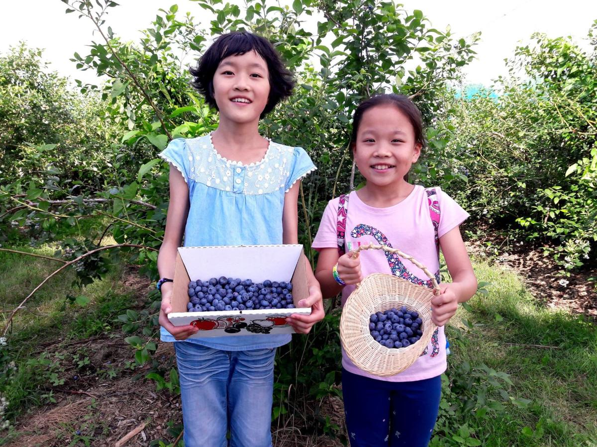 Girls Picking Blueberries at Terhune Orhcards