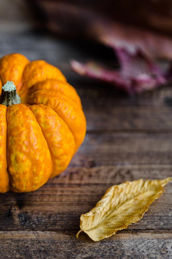 Thanksgiving Pumpkin - Stock Photo