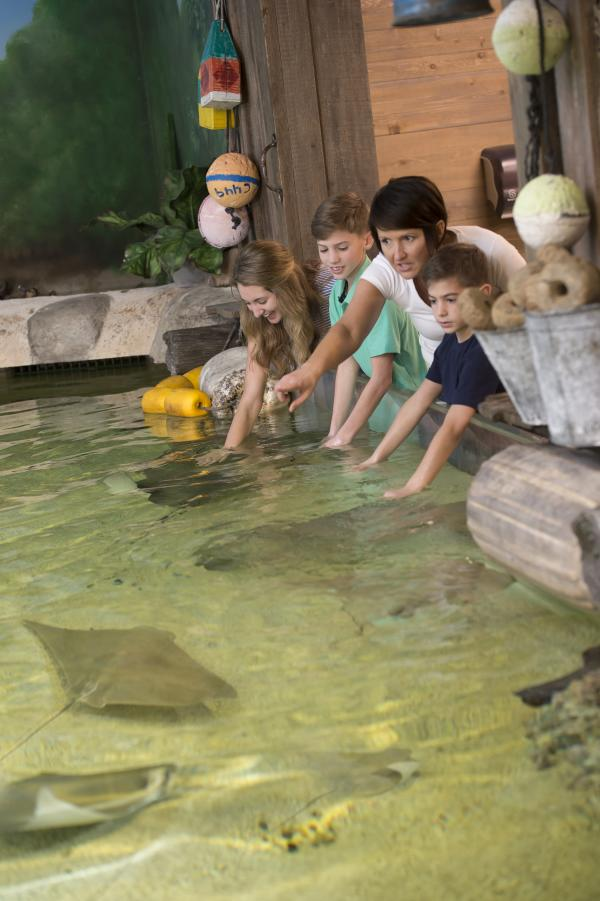 Petting A Sting Ray-Zoo-Fort Wayn