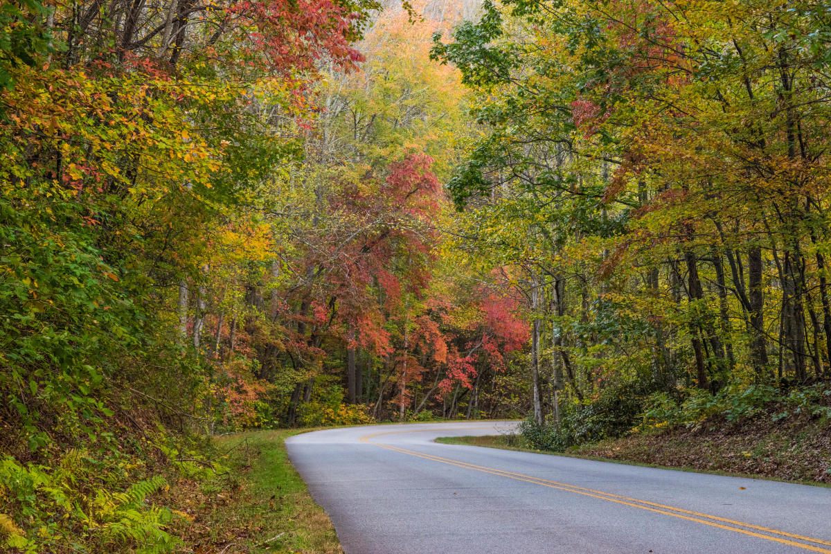 Blue Ridge Parkway near Chestnut Cove Fall 2017