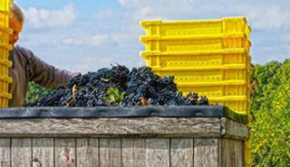 Treleaven Winery Harvest Festival
